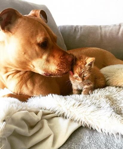 Bubba adora lamber sua irmã. (Foto: Instagram/Bubbalovesrue)