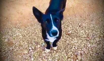O cachorro vira-lata herói Lupi. (Foto: Arquivo Pessoal)