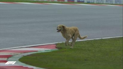 Cachorro invade pista da F1 na Índia. (Foto: Twitter/@F1)