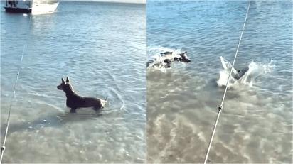 Cachorro pula em cima de tubarão para evitar que seu dono seja atacado. (Foto: Instagram/b2badventures)