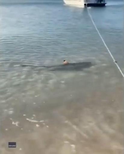 O tubarão estava na margem da praia. (Foto: Instagram/b2badventures)
