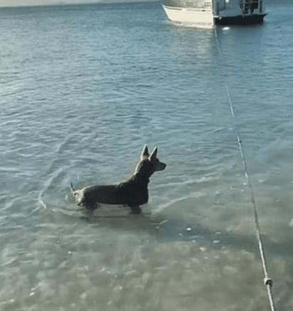O cãozinho observando o tubarão. (Foto: Instagram/b2badventures)