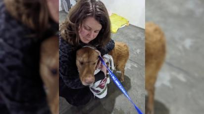 Kate e seu cão Walter, reunidos depois de quase um ano separados. Foto: (Lost Paws Trapping)