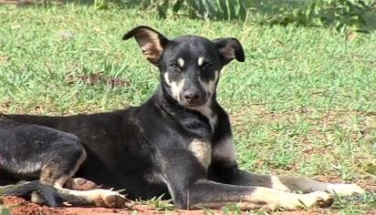 A cadelinha Neguinha foi filmada pegando a carteira do homem que a alimenta todos os dias. (Foto: Reprodução Yourube/TV Paranaíba)