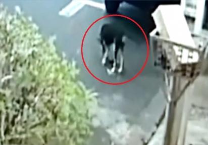 A câmera de segurança da vizinha flagrou Neguinha recolhendo a carteira da rua. (Foto: Reprodução Youtube/TV Paranaíba)