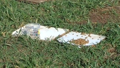 Paulo César encontrou a sua carteira junto do potinho de água e comida da Neguinha. (Foto: Reprodução Youtube/TV Paranaíba)