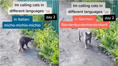 O homem chama o gato em italiano e o felino não responde, mas quando o chama em alemão rapidamente o gato vai em sua direção. (Foto: Reprodução TiTok/@g.catt.eng)