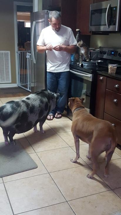 O porquinho Ollie se dá bem com todos os integrantes da família. (Foto: Instagram/ollieandthecrew)