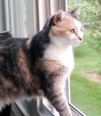Cheryl Schmidt pensou ter encontrado seu gato morto. (Foto: Reprodução/Mercury Press & Media)