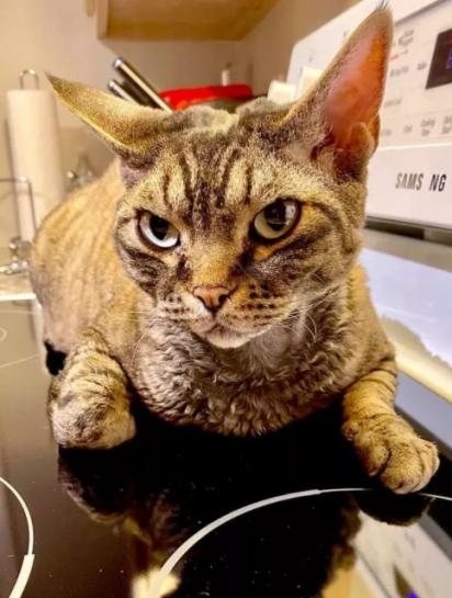 O olhar desse gato é devassador. (Foto: Facebook/Karen Edgin)