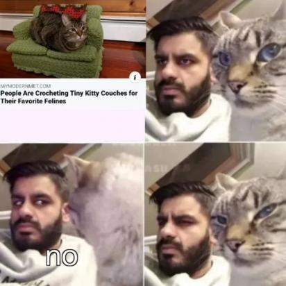 Tudo o que eu for fazer, meu gato: não!. (Foto: Facebook/Brianna Mae)
