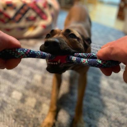 A cadela Meg foi adotada pelo departamento de polícia e foi treinada para atuar como K9. (Foto: Facebook/K9 Mag)