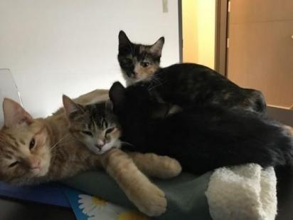 Ron sempre na companhia dos animais que estão na clínica. (Foto: Facebook/Northfield Veterinary Center)