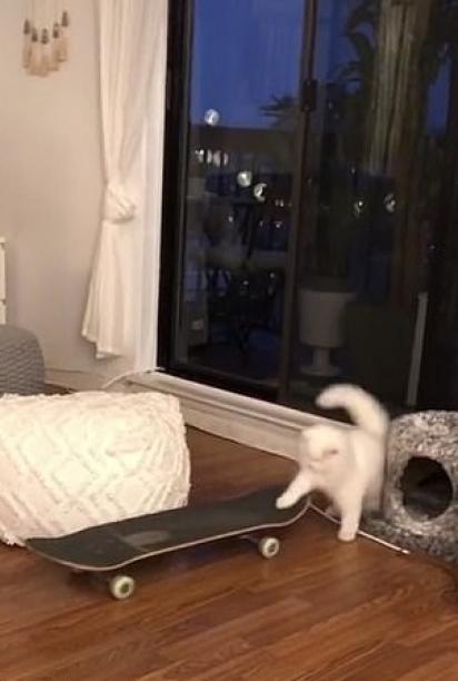 O gatinho voluntariamente sobe no skate. (Foto: Instagram/yeti_ready)