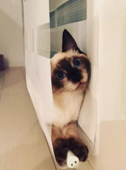 Você me achou mamãe? (Foto: Imgur/ DD1234567)