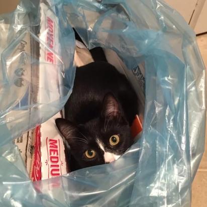 Alguém foi encontrado antes de ir parar no lixo. Ufa! (Foto: Imgur/CookiesForDevo)