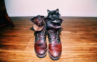 Eis aqui a personificação do gato de botas. (Foto: Imgur/ jonbrandoncruz)