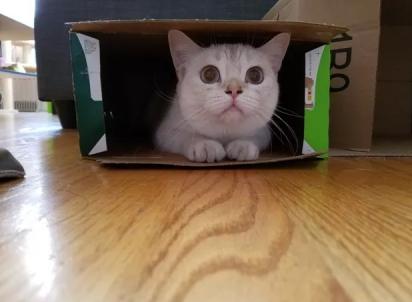 Uma caixa de papelão é o esconderijo perfeito! (Foto: Imgur/lect1)