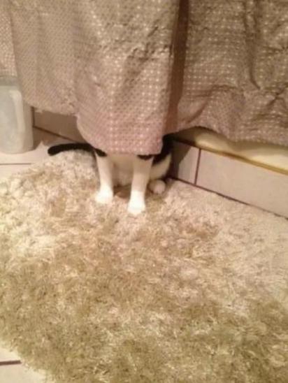De duas uma: ou a cortina criou pernas ou há um impostor atrás dela. (Foto: Imgur/Whogivesafuckaboutmyname)