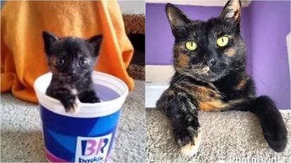 O gatinho Nico com: 2meses x 7 anos. (Foto: Facebook/Jennifer Juniper)