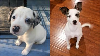 Este filhotinho foi abandono, mas com muito amor se tornou um lindo cachorrinho. (Foto: Facebook/Kate Huffman)