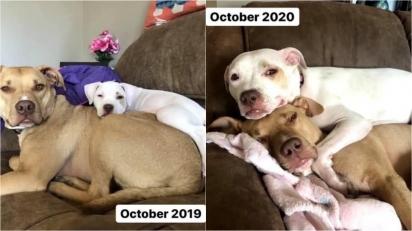 Quanto mais as coisas mudam, mais elas permanecem as mesmas. (Foto: Facebook/Andee Foster)