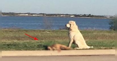 Um usuário do Facebook postou a foto de um cachorro ao lado de corpo de seu amigo morto em Dallas, Texas. (Foto: Facebook/Samuel Flores)