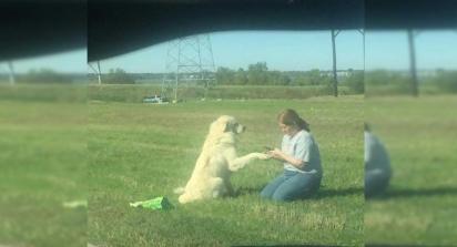 O cão estende a pata para um de seus salvadores. (Foto: Facebook/Jullie Fennell)