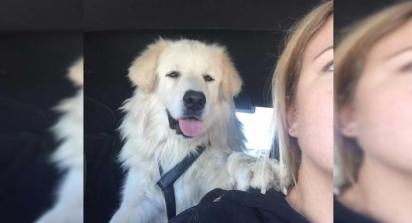 No caminho para o veterinário, o cão estende sua pata para a mulher que o resgatou. (Foto: Facebook/Jullie Fennell)