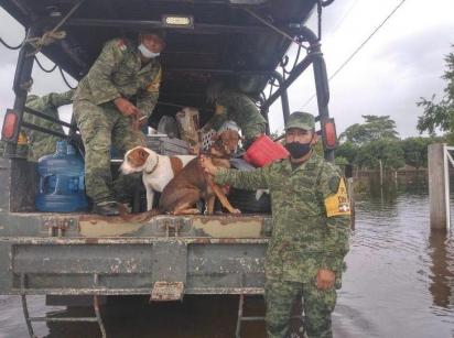 A organização Caninos 911 relatou um grande número de animais de estimação abandonados durante a enchente causada pelo furacão. (Foto: Facebook/Caninos 911, A.C.)
