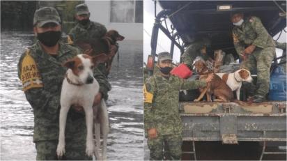 Casas foram destruídas e muitos animais morreram por não conseguirem escapar da enchente. (Foto: Facebook/Caninos 911, A.C.)