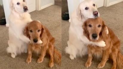 Cão se desculpa com seu irmão após devorar toda a sua comida. (Foto: Instagram/wat.ki)