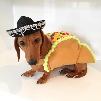 Roupa mexicana também está inclusa no guarda-roupa da pequena Daisy. (Foto: Instagram/littledaisydachshund)