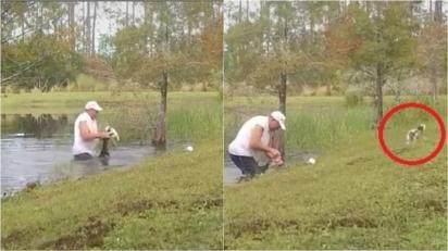 Homem é filmado lutando com crocodilo em lago para salvar a vida do seu cãozinho que estava sendo atacado. (Foto: Reprodução TikTok/@wingwomanme)