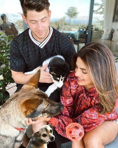 Nick Jonas e Priyanka Chopra resgataram um doce cachorrinho chamado Panda em 2020. (Foto: Instagram/pandathepunk)