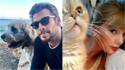 Celebridades que optaram por adotar cães e gatos de abrigos. (Foto: Instagram/liamhemsworth | Instagram/Taylor Swift)