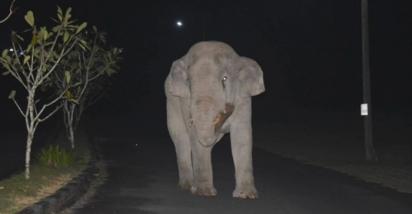 Normalmente, o elefante vive em uma floresta próxima, mas costuma ser encontrado andando pelas casas à noite e é bem conhecido pelos habitantes locais. (Foto: Reprodução/ViralPress)