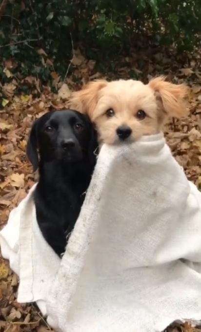 Knut, o cachorrinho dourado junto do seu amigo Pauli. (Foto: Reprodução Instagram/knutini_)