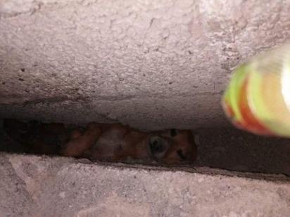 O cachorrinho ficou preso entre duas paredes ao cair brincando com as crianças. (Foto: Twitter/@ActualidadER)