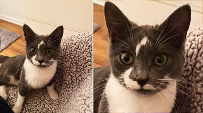 Gato adotado tem o mesmo símbolo na testa que Harry Potter. (Foto: Reddit / smolsmil)