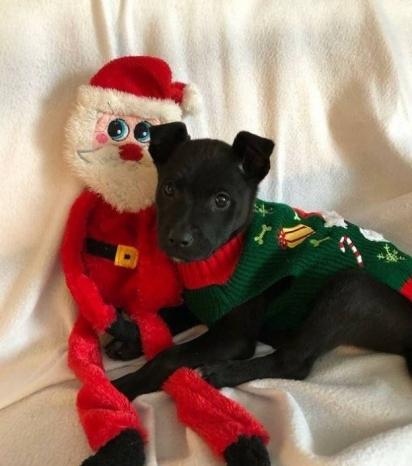 O filhote Snowflake foi adotado e agora vive num lar aconchegante e feliz. (Foto: Facebook/My Pets)