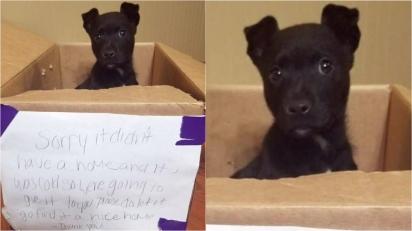 Cachorrinho é deixado por garotinho em frente a escola com um bilhete. (Foto: Facebook/My Pets)