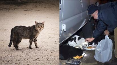 Idoso de 76 anos coleta e vende sucata para alimentar gatinhos em situação de rua. (Foto:  Brian Wangenheim no Unsplash  / Hartford Courant/Peter Casolino)