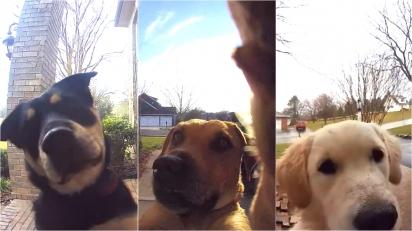 Campainha com câmera flagra cães usando o dispositivo para chamar os donos. (Foto: Reprodução/ring.com)