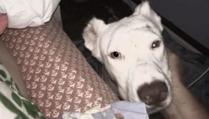 A cadela Niya foi agradecer a sua salvadora na calada da noite. (Foto: Facebook/Arrow Dog Rescue-Animal Rescue Revolution on Wheels)