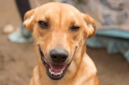 Os cães são seres amigáveis, tudo o que precisam é um pouco de amor. (Foto: Facebook/Refugio Gamaliel)