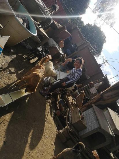 Há poucos dias, o abrigo abriu suas portas das 9h às 18h, de segunda a domingo, inclusive nos feriados, para receber pessoas que queiram dar amor e carinho aos animais. (Foto: Facebook/Refugio Gamaliel)