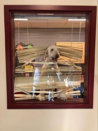 A cachorrinha Sandy foi flagrada na sala do diretor. (Foto: Arquivo Pessoal/Karen Manthey)