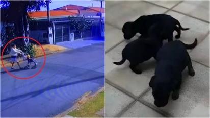 Câmera flagra mulher abandonando 6 filhotes de cachorro em Campinas (SP). (Foto: Reprodução/Arquivo Pessoal)