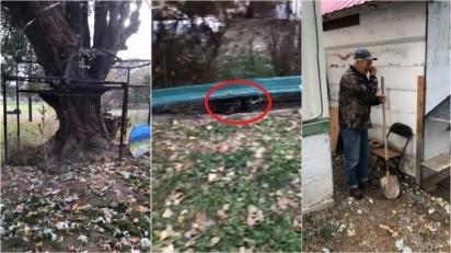 Homem cria parquinho cercado para que o seu gato possa brincar no pátio aberto em segurança. (Foto: Reprodução Facebook/Jayli Wolf)